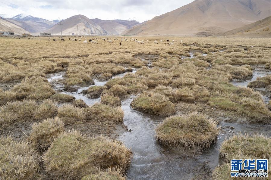 (2020珠峰高程测量)(3)珠峰自然保护区生物多样性得到有效保护