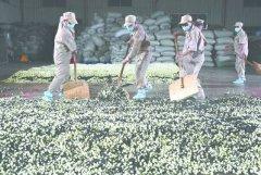 福建:茶叶出口逆势增长
