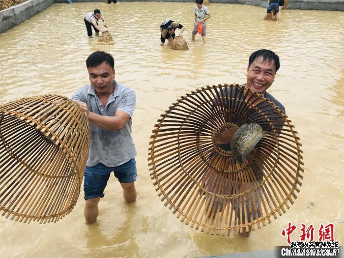 游客在佛山西樵山渔耕粤韵旅游文化园体验捕鱼之乐 曾令华 摄